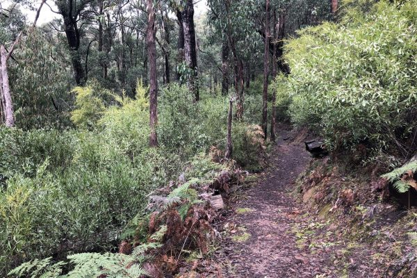 walking-tours-wellness-walks-womens-walking-group-bush-trail