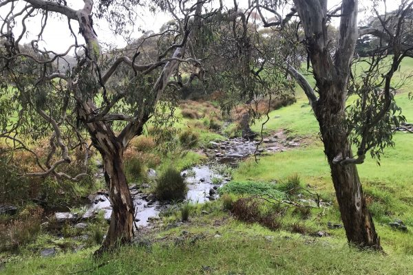 Fleurieu-Peninsula-South-Australian-walking-tours-Balquidder-Creek